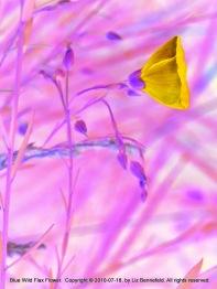 Wild Flax Flower (no. 20502)