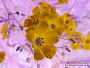 Flower Art #7611
