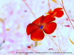 Flower Art #8024